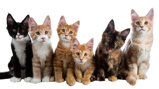Youtube  creator Facts About Cats being photographed