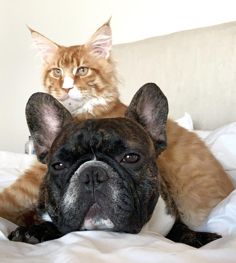 Photo of Dash And Philip